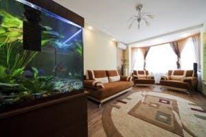 aquarium in a roomm